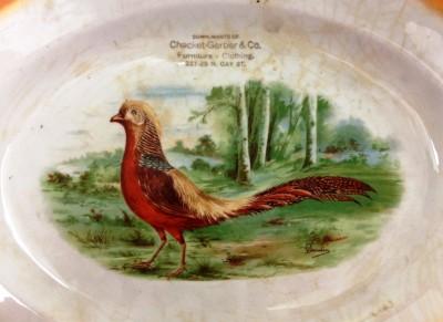 Slightly startled pheasant.