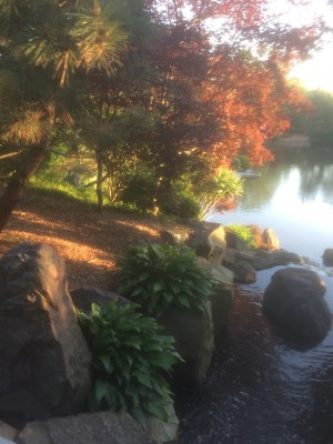 The Japanese Garden at the  Missouri Botanic Garden