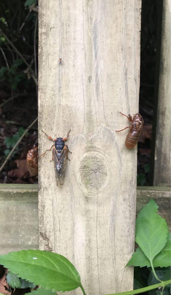 A cicada and an exoskeleton.